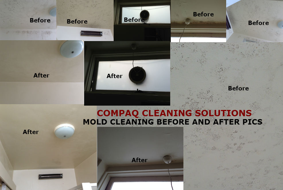 END OF LEASE CLEANING MOULD REMOVAL IN MELBOURNE